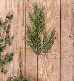 Red Cedar Floral Spray