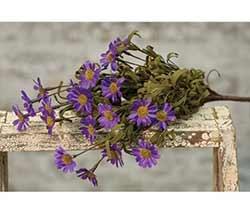 Purple Mountain Daisy Pick
