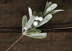 Frosted Mistletoe 10 inch Pick