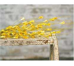 Wispy Yellow Buds Floral Spray
