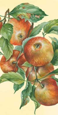 Apple Harvest Pocket Tissue