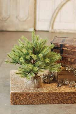Park Pine Little Giant Tree - 21 inch