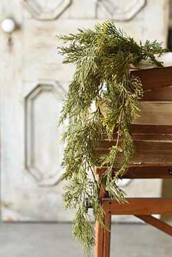 Alpine Cedar Hanging Bush